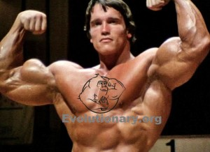 Arnold schwarzenegger cycle evolutionary arnold schwarzenegger double biceps malvernweather