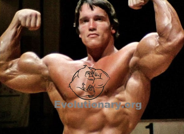 Arnold Schwarzenegger Cycle - Evolutionary.org