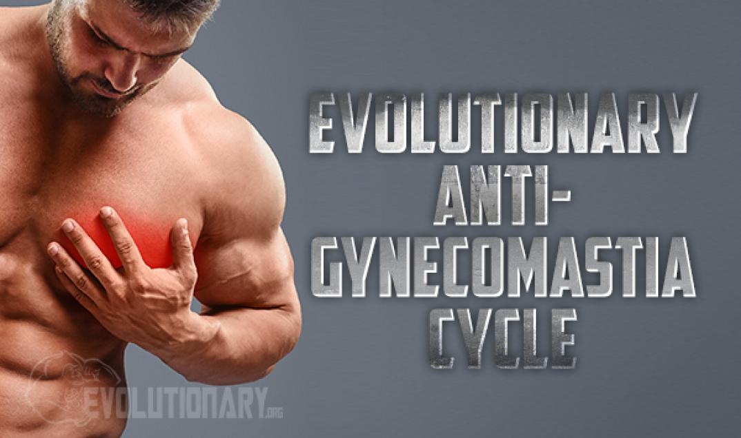 Evolutionary Anti-Gynecomastia Cycle - Evolutionary org