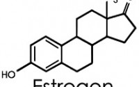 Dangers of Estrogen