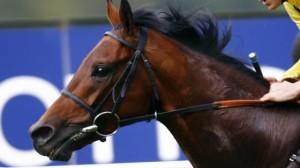 tren horse steroids
