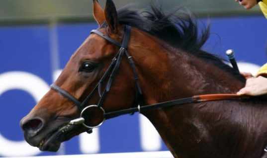 Life bans must for doped horses, says BHA chief exeutive