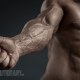 Keeping Gains From Each Steroid Cycle II