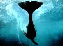 Lobbying Blitz Launched By SeaWorld Critics