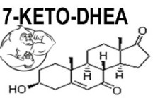 Fig 1. 7-Keto DHEA Chemical Structure