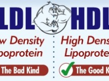 Fig 1. LDL vs. HDL