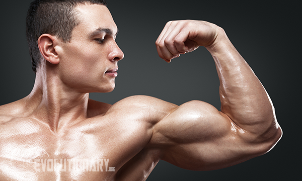 dosage clomiphene citrate bodybuilding