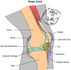 winstrol joint pain