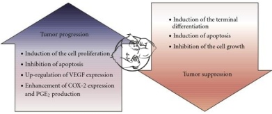 tumor-progression-tumor suppression