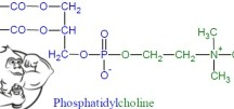 Fig 1. PhosphatidylCholine (PC) Chemical Structure