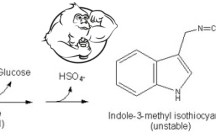 Fig 1. Indole-3-Carbinol -- How It Works