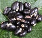 Mucuna Pruriens Bean