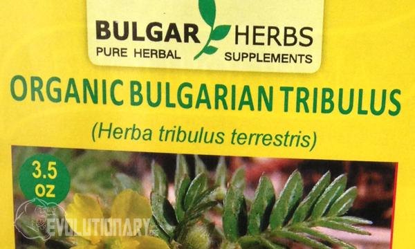 Bulgarian Tribulus Terrestris during PCT - Evolutionary.org