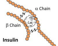 Fig 1. Insulin Chemical Structure