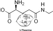 Fig 1. L-Theanine Chemical Structure