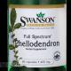 Phellodendron