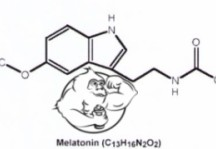 Fig 1. Melatonin Chemical Structure