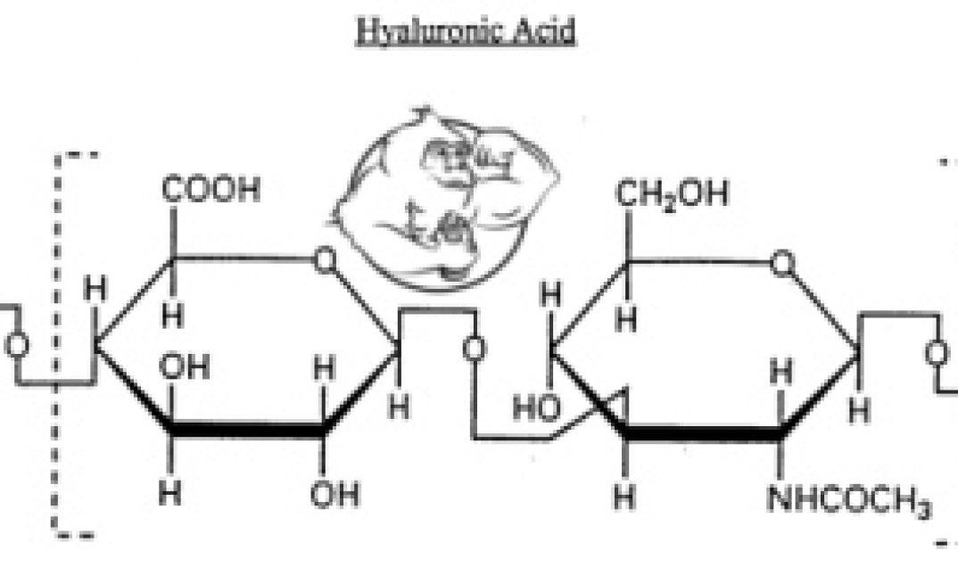 Hyaluronic acid (sodium hyaluronate) - Evolutionary org