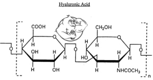 Hyaluronic acid (sodium hyaluronate) - Evolutionary org