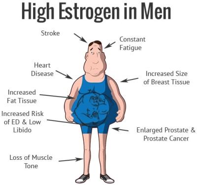 high estrogen men