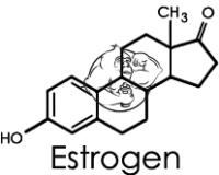 estrogen chemical structure