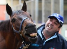 Horse Trainers Found Guilty Of Cobalt Doping