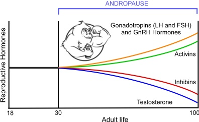 Andropause Hormonal Chart