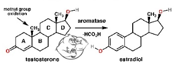 aromatase inhibitor conversion