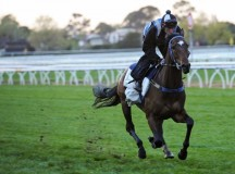 Leading Horse Trainer Cleared Of Deliberate Cobalt Doping