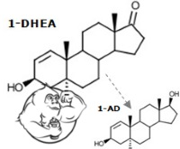1dhea-chemical-structure