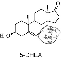5-DHEA chemical structure