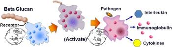 Beta Glucan immune system