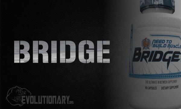 steroids-bridge