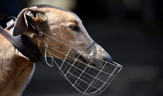 NSW Trainers Named In Greyhound Doping Scandal