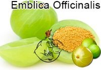 embalica officinalis
