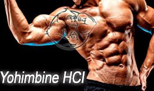 youhimbine body