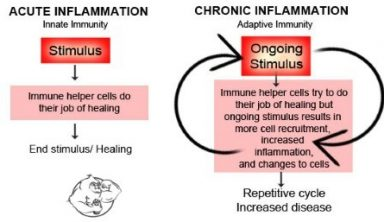 acute vs chronic inflammation