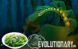 EVO-Iodine-Kelp