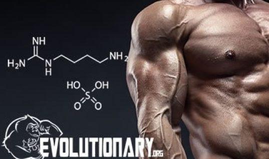 EVO-Agmatine Sulfate