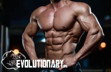 EVO-Muscle growth