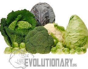broccoli and other cruciferous vegetables